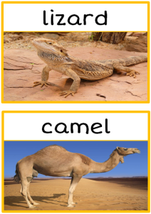 desert-animals-photo-set-p3