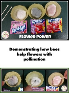 Plant FREEBIE Pollination Flowers